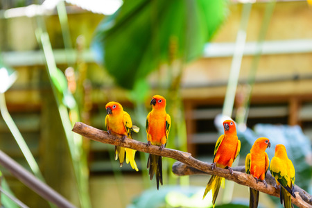crowd tail: Parrot Birds resting on tree branch
