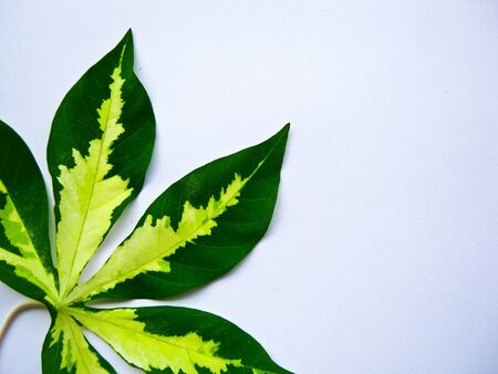 color of leaf Stock Photo - 7515744