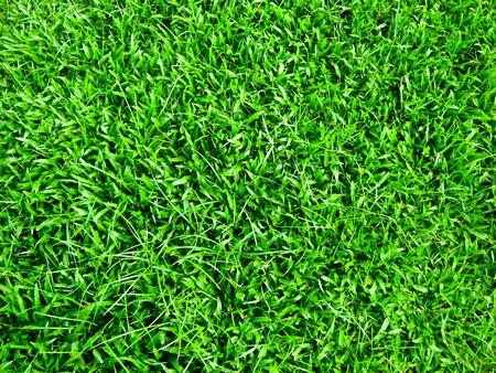hierba verde  Foto de archivo - 7539460