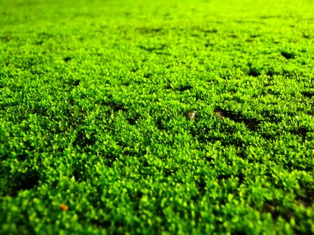 green moss Stock Photo - 7539442