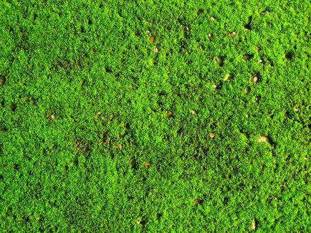 green moss Stock Photo - 7539465