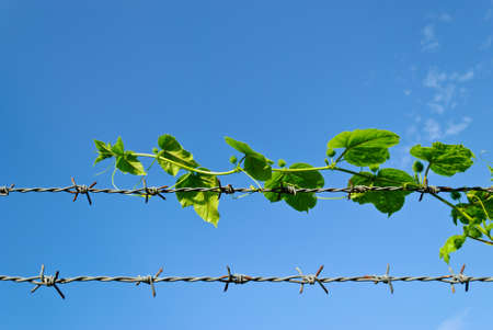 tree hiding the sharp spikes of barb wire Stock Photo - 9939285