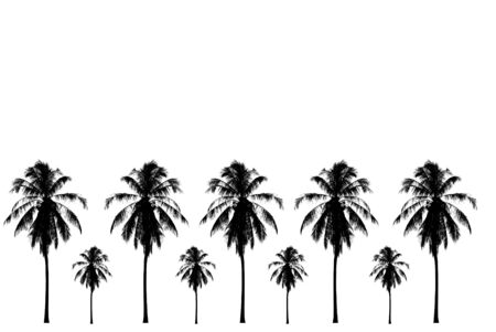 Black And White Coconut Tree Stock Photo Picture And Royalty Free