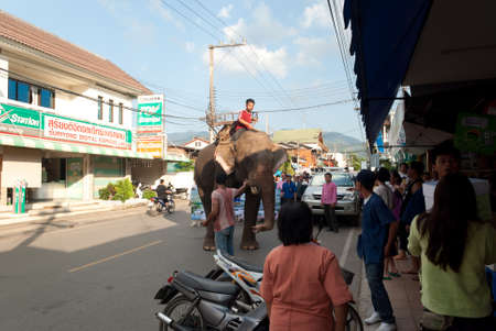 MAEHONGSON THAILAND-OCTOBER 25 : thai elephants and NGOs and volunteers collected relief supplies for sufferers about flood crisis in Thailand on October 25, 2011 in Maehongson, Thailand.