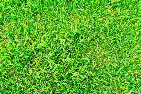 green grass background Stock Photo - 11572654