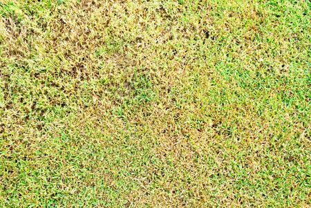 green and die grass background Stock Photo - 11572655