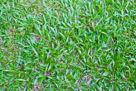green grass background Stock Photo - 11759294