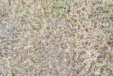 dry grass Stock Photo - 11759348