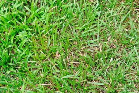 green grass background Stock Photo - 11759748