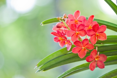 Red orchids flowers Stock Photo - 14538549