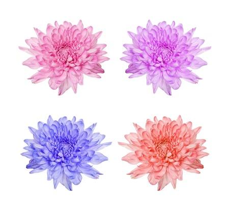Daisy flowers isolated over white background Stock Photo - 15061758