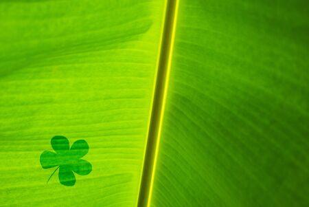 leaf shadow on banana green leaf photo