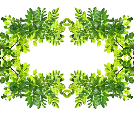 leaf tree on white background Stock Photo - 19320402