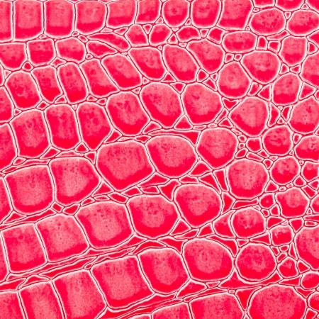 peau cuir: Couleur rose de cuir de crocodile texture de la peau Banque d'images