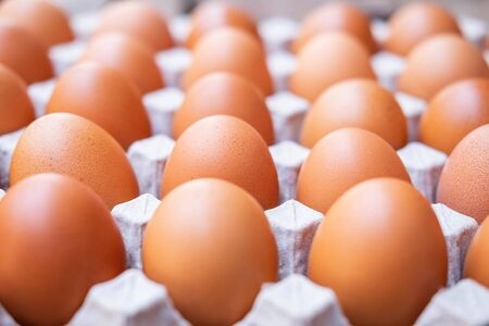 A close up of raw chicken eggs in egg panels