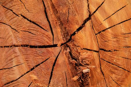 The background texture of the cut tree