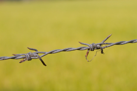 Rust barbed wire fence and green field photo