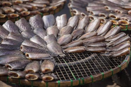 pectoralis: Dried Fish on threshing basket  Dried Fish  Trichogaster pectoralis Stock Photo