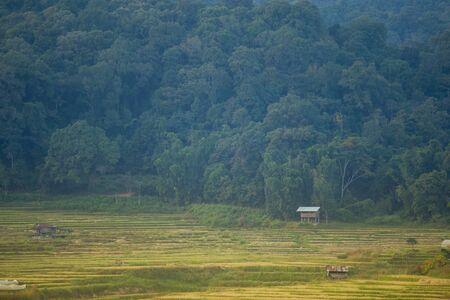 terraced: Terraced Rice Field in Chiangmai, Thailand