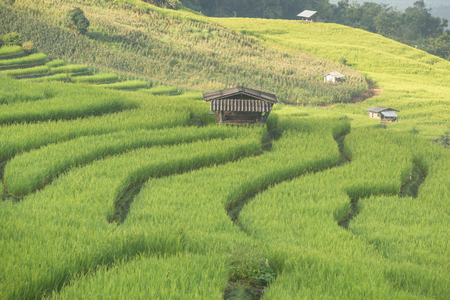 terraced: Terraced Rice fields ,Papongpieng, Chiang Mai,Thailand.