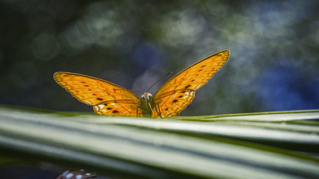sa: Beautiful butterfly in nature with bokeh Backgrounds. Pang Sida national park. Sa Kaeo Province, Thailand. Stock Photo