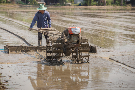 pushcart: Thai Farmer plowman using tiller tractor  in rice field Stock Photo