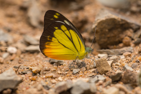 sitting on the ground: Butterfly on the ground