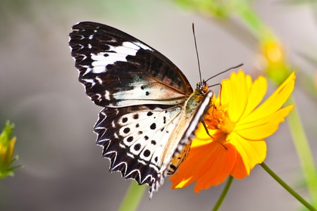 butterfly,flowers