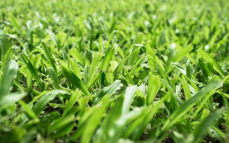 unkept: grass