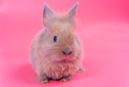 Small light brown cute bunny rabbit on pink background
