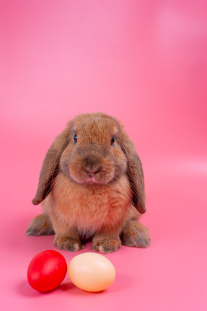Brown bunny rabbit stay behind  easter eggs with pink background and copy space