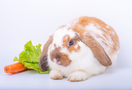 White and brown rabbit nearly stay to carrot and green vegetable on white background Фото со стока