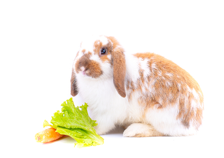 White and brown rabbit nearly stay to carrot and green vegetable on white background