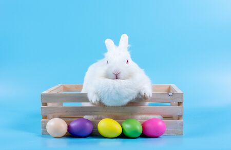 Little white rabbit in the wooden box with blue background surround with different color of ester eggs. 写真素材