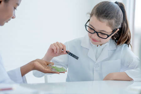 Young Caucasian scientist girl hold magnifying glass and look to glass plate with piece of plant tissues that hold by African American friend during do experiment in laboratory or classroom.