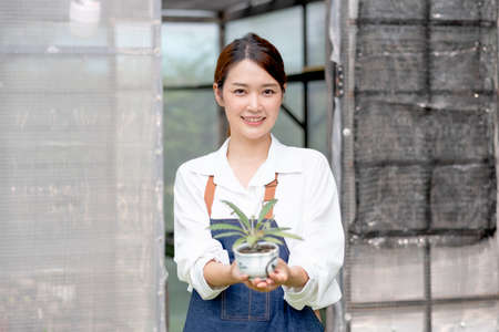 Beautiful Asian girl hold pot of plant and present to camera stand in front greenhouse workplace. Sustainable with grow cactus and other plant concept.