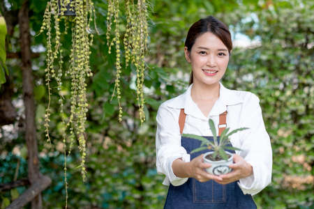 Beautiful Asian girl hold pot of plant and present to camera stand in front green wall in her house. Sustainable with grow cactus and other plant concept.