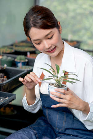 Beautiful Asian girl use forcept to decorate stone into cactus pot and stay in greenhouse workplace. Sustainable with small business relate to plant concept.