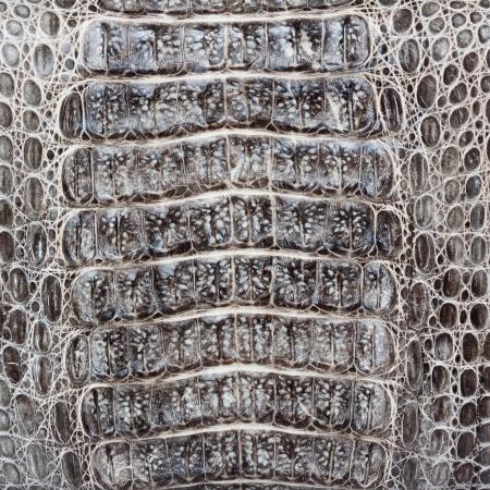reptile skin: Crocodile skin texture or  Stock Photo