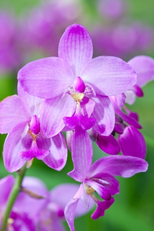 Pink Orchid Flowers photo
