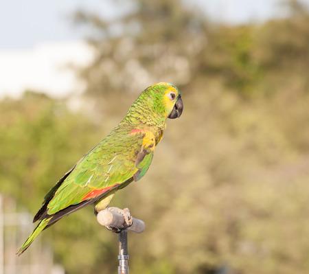 parot: Parrot