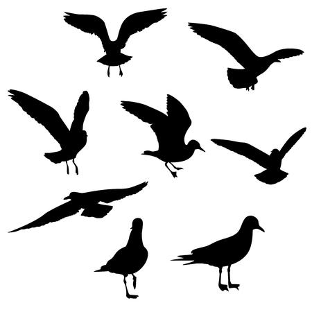 Seagull Set Silhouettes on the white, Vector esp 10 Çizim