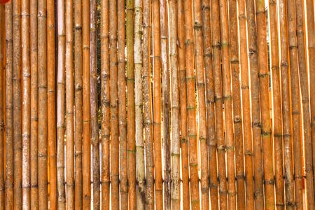 Various bamboo trees with natural colors