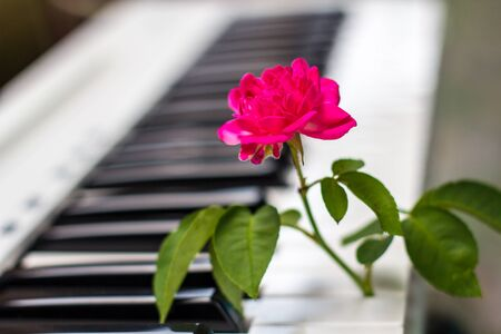 Love songs Piano with pink flowers
