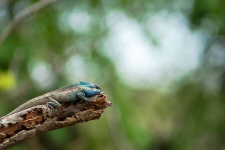 A chameleon sticks to branches in a natural forest Banco de Imagens