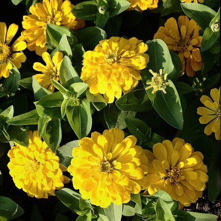 brighten: Yellow flowers brighten in sunny day
