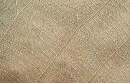 hojas secas: Textura Hojas secas Foto de archivo