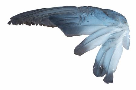 paloma de la paz: Ala del pájaro aislado en el fondo blanco Foto de archivo