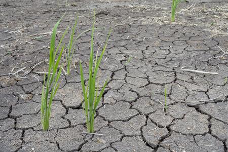 sequias: la sequ�a del suelo agrietado