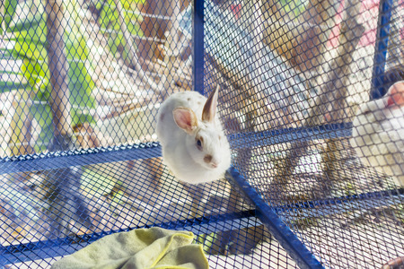 rabbit in cage: Rabbit in cage Stock Photo